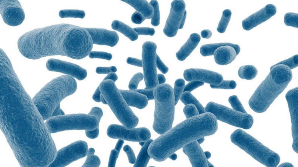 Bacteria intestinal pasteurizada podría detener la progresión de la obesidad y la diabetes en ratones