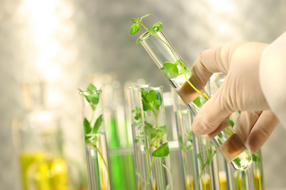 Biotecnología de tratamientos a base de plantas para la la diabetes