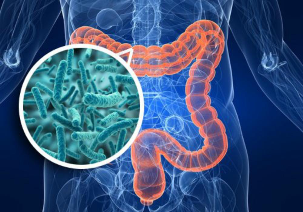 Los científicos descubren vínculo importante entre el sistema inmunológico, las bacterias del intestino y el metabolismo de la glucosa