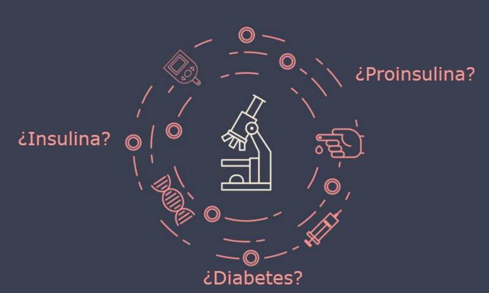 Se investiga el mal plegamiento de la proinsulina para comprender mejor la diabetes