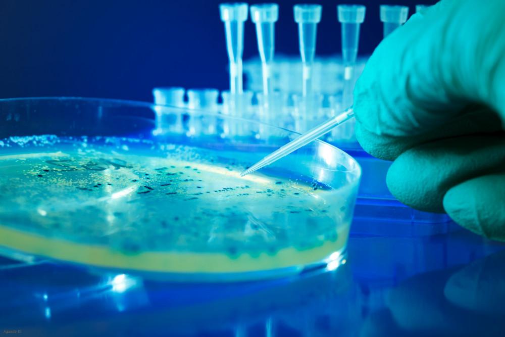 Trasplante de células pancreáticas dan esperanza a los investigadores que trabajan para curar la diabetes tipo 1