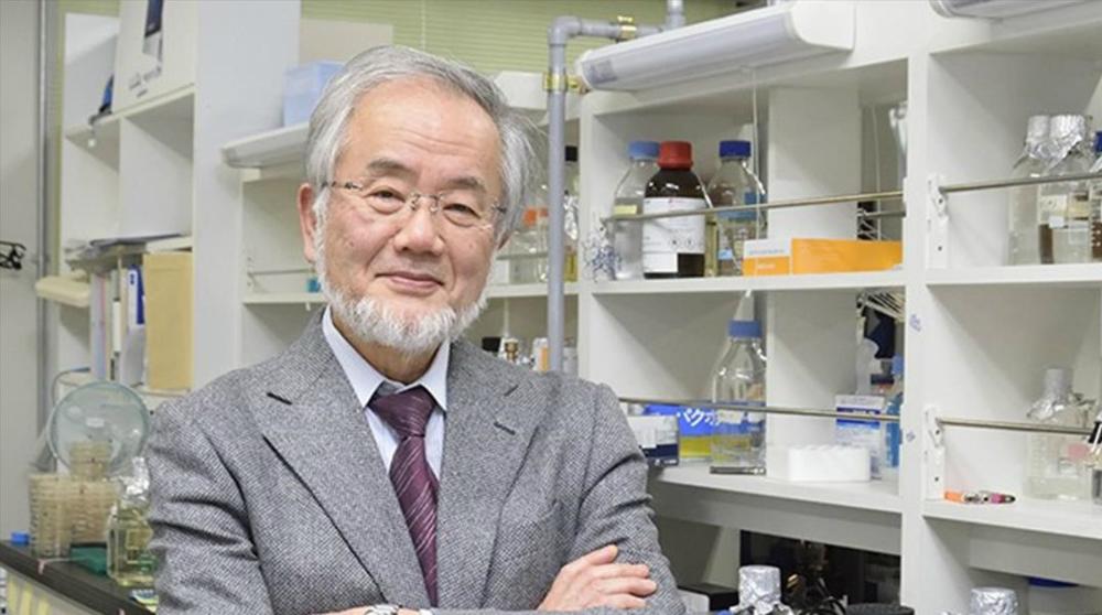¿Por qué el premio Nobel de este año en Materia de Medicina debería ser en la comprensión de la diabetes?